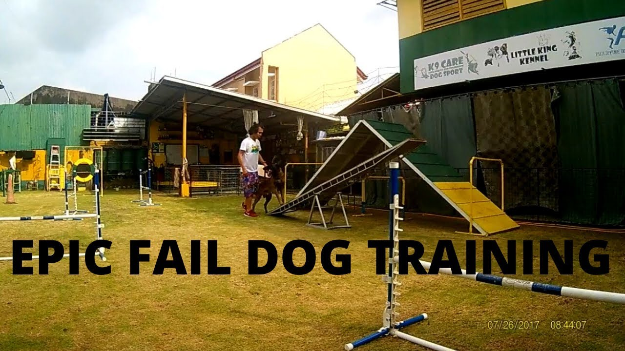 Epic Fail Dog training process - Epic Fail Dog training process