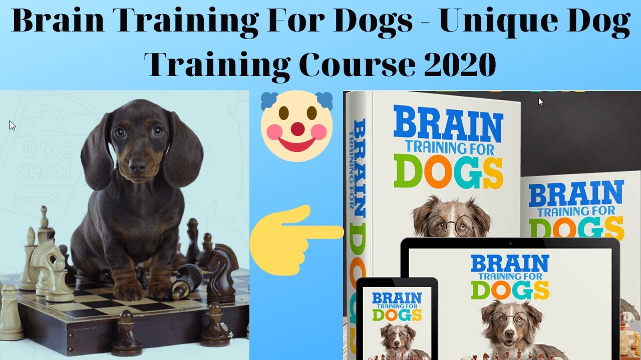 Brain Training For Dogs Unique Dog Training Course 2020 Review - Brain Training For Dogs - Unique Dog Training Course 2020 Review