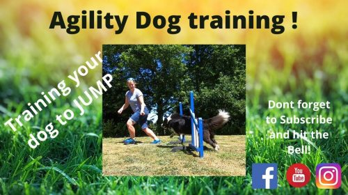 Jumps Agility Dog Training 500x280 - Jumps | Agility Dog Training!