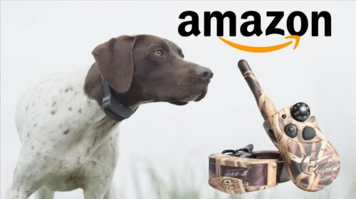 TOP 5 BEST Hunting DOG TRAINING E COLLAR on Amazon 2020 500x280 - TOP 5 BEST Hunting DOG TRAINING E-COLLAR on Amazon 2020