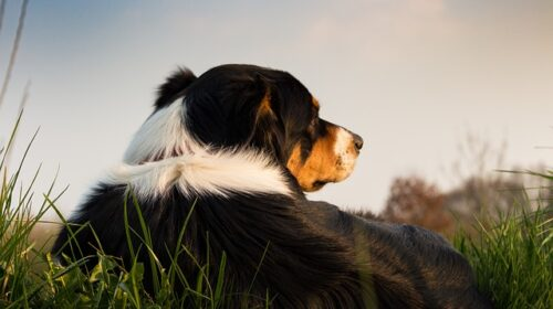 tips to teach any dog new tricks 500x280 - Tips To Teach Any Dog New Tricks
